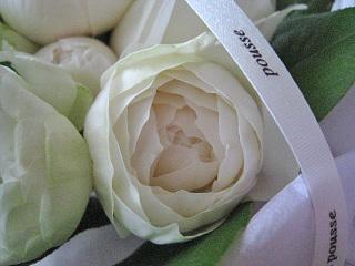 Pousse_blanc